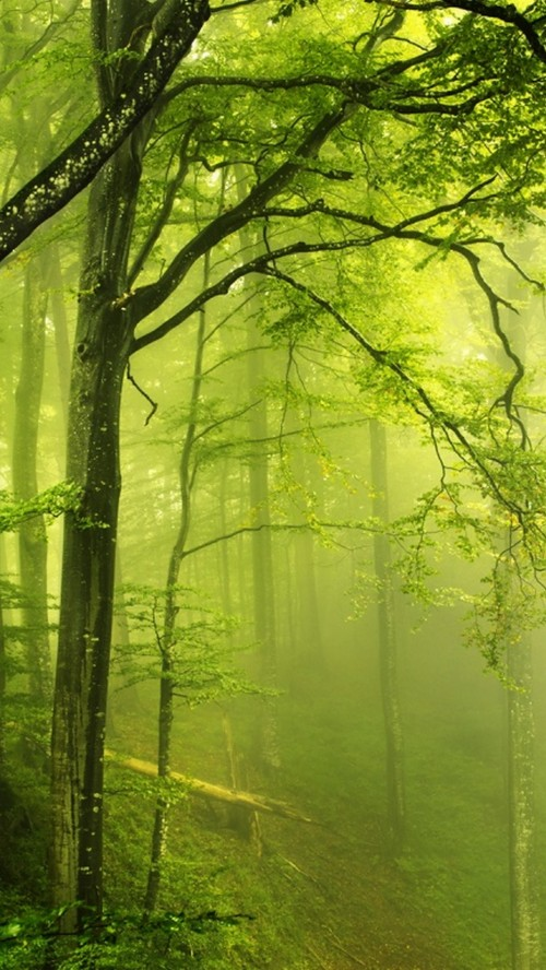 Fondo De Pantalla Verde Naturaleza Verde Paisaje Natural Arbol Bosque Bosque De Crecimiento Antiguo Bosque De Madera Dura Del Norte 1016910 Wallpaperkiss