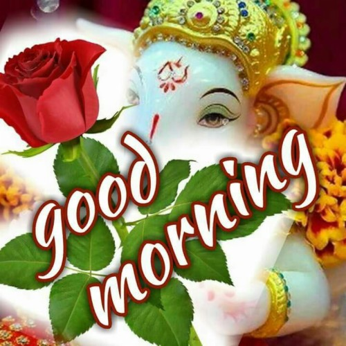 Good Morning Good Night Wallpaper Flower Plant Font Rose Love Fictional Character Cut Flowers 1097930 Wallpaperkiss